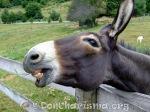 donkey-pb-105719-DonCharisma.org-1024LE
