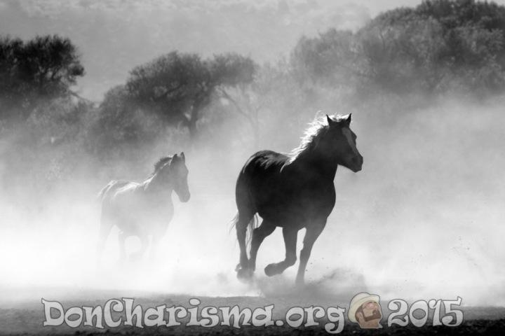 horse-pb-430441-DonCharisma.org-1024LE