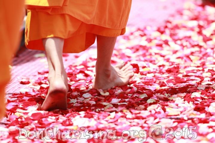 monk-walking-rose-petals-buddhism-458491-DonCharisma.com-1024LE