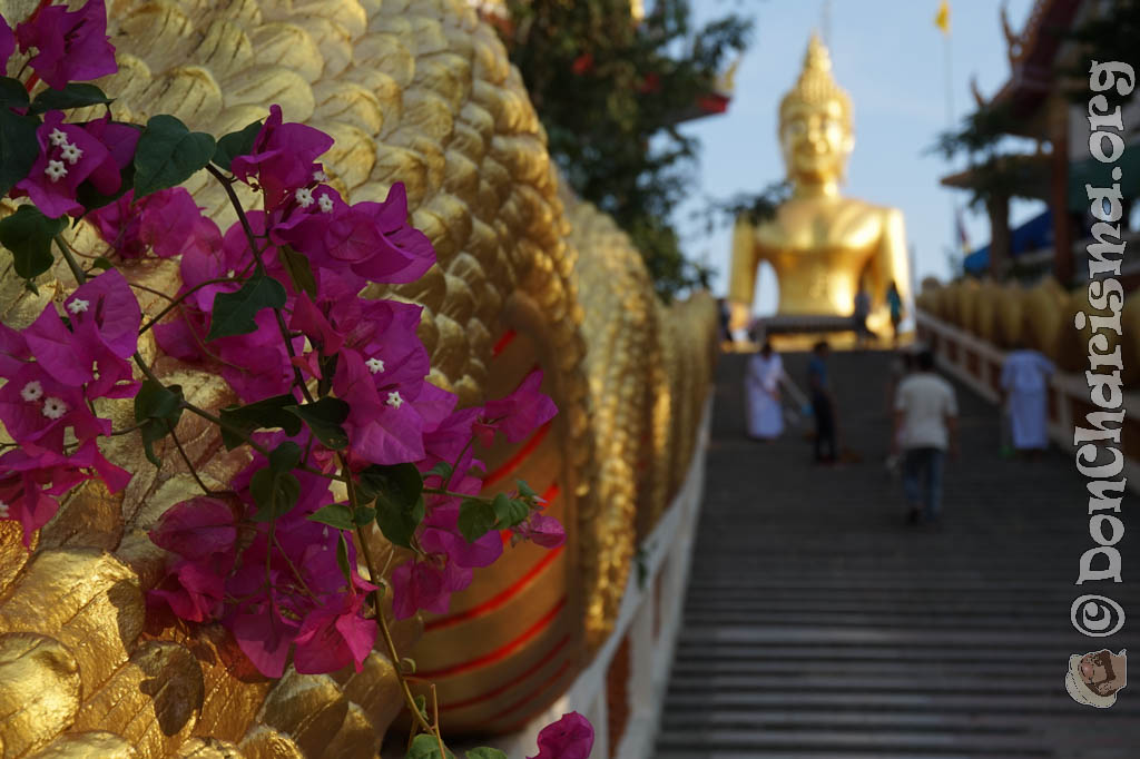 Bougainvillea Buddha