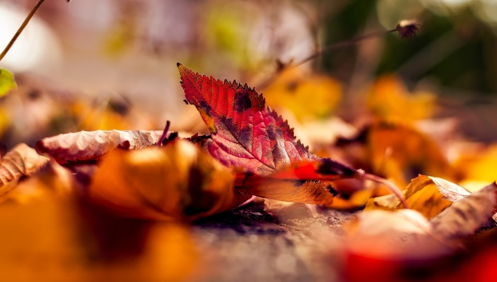 autumn,fall,leaves,leaf,macro,closeup,falling leaves,colorful,picturesque,landscape,hdr,panorama,rural, DONCHARISMA