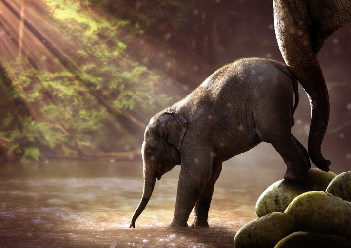 elephant,young,watering hole,young elephant,animal,proboscis,mammal,pachyderm,nature,young animal,family,baby elephant,water,river,landscape,water hole,elephant's child,push,teach,dare,courage,anxious,learn,refuse, DONCHARISMA