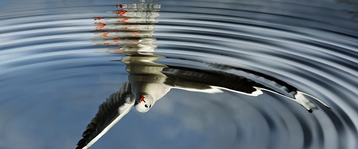 birds,water,mirroring,wave,mirror image,flying,seagull,sky,plumage,freedom,water bird,blue,gull,air,clouds,feather,wing,bird, doncharisma